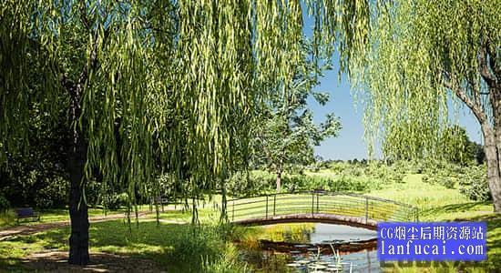 Blender插件-花草树木植物绿化模型预设 Botaniq Tree And Grass Library V6.2.2